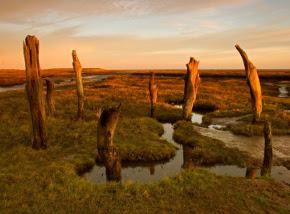 north-norfolk-salt-marsh-290x214